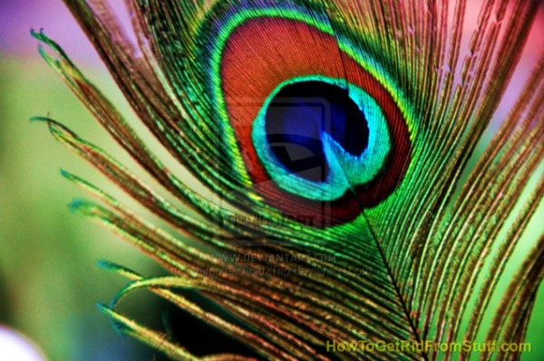 The_Peacock_Feather_by_VampirexAcidxTrip