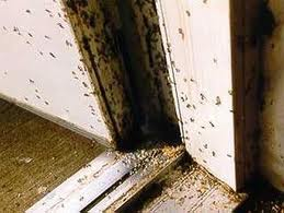 How To Get Rid From Carpenter Ants