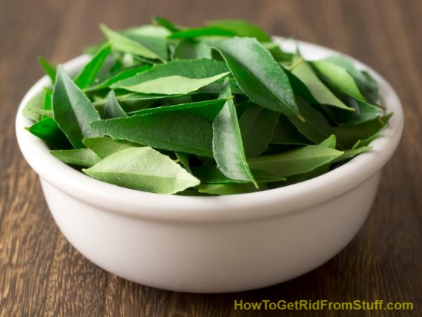 neem-leaves-in-a-white-bowl