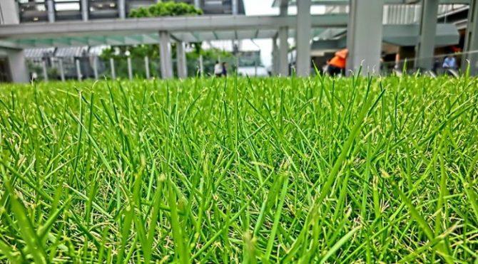 Trim your lawn